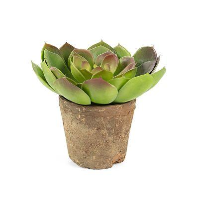 Plantă artificială SUCCULENT