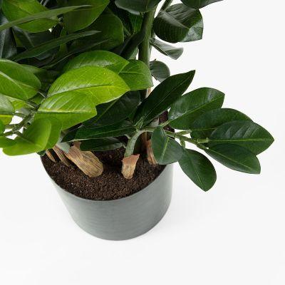 Plantă artificială SMARAG - Set 2 buc.
