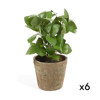 Plantă artificială BASIL - Set de 6 buc.
