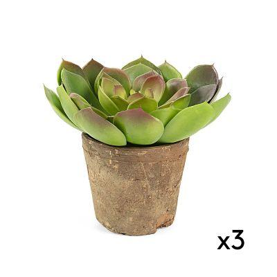 Plantă artificială SUCCULENT - Set 3 buc.